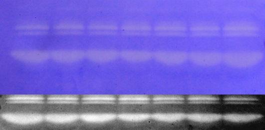 新上海滩古筝曲谱-胶酶谱mmp 上海秉新生物科技有限公司